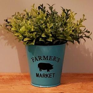 🆕️ Farmers Market Boxwood Plant